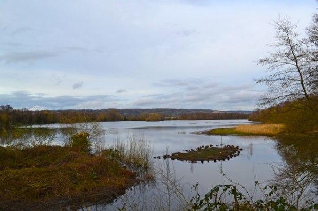 Sevenoaks wildlife reserve on the day ofreckoning
