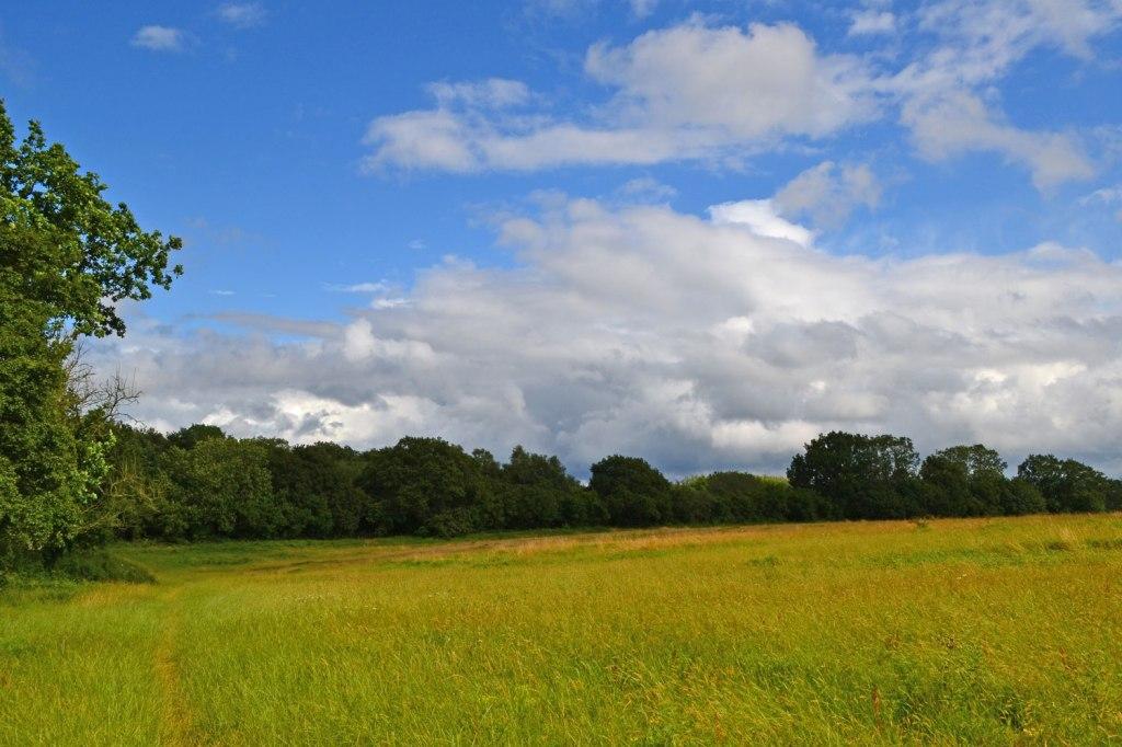 Meadow on North Downs escarpment