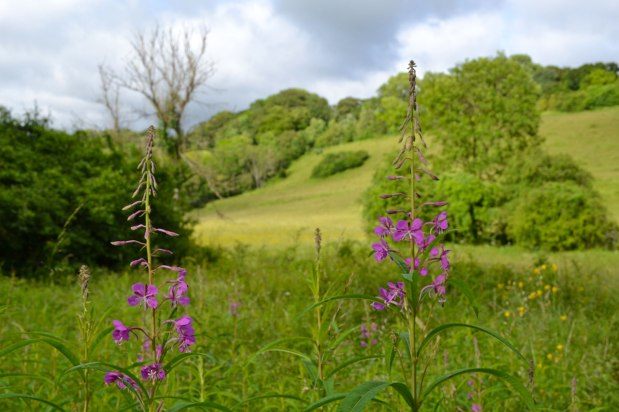 Microclimates and wildmeadows