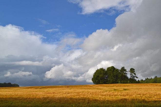 Wheat above Heaverham